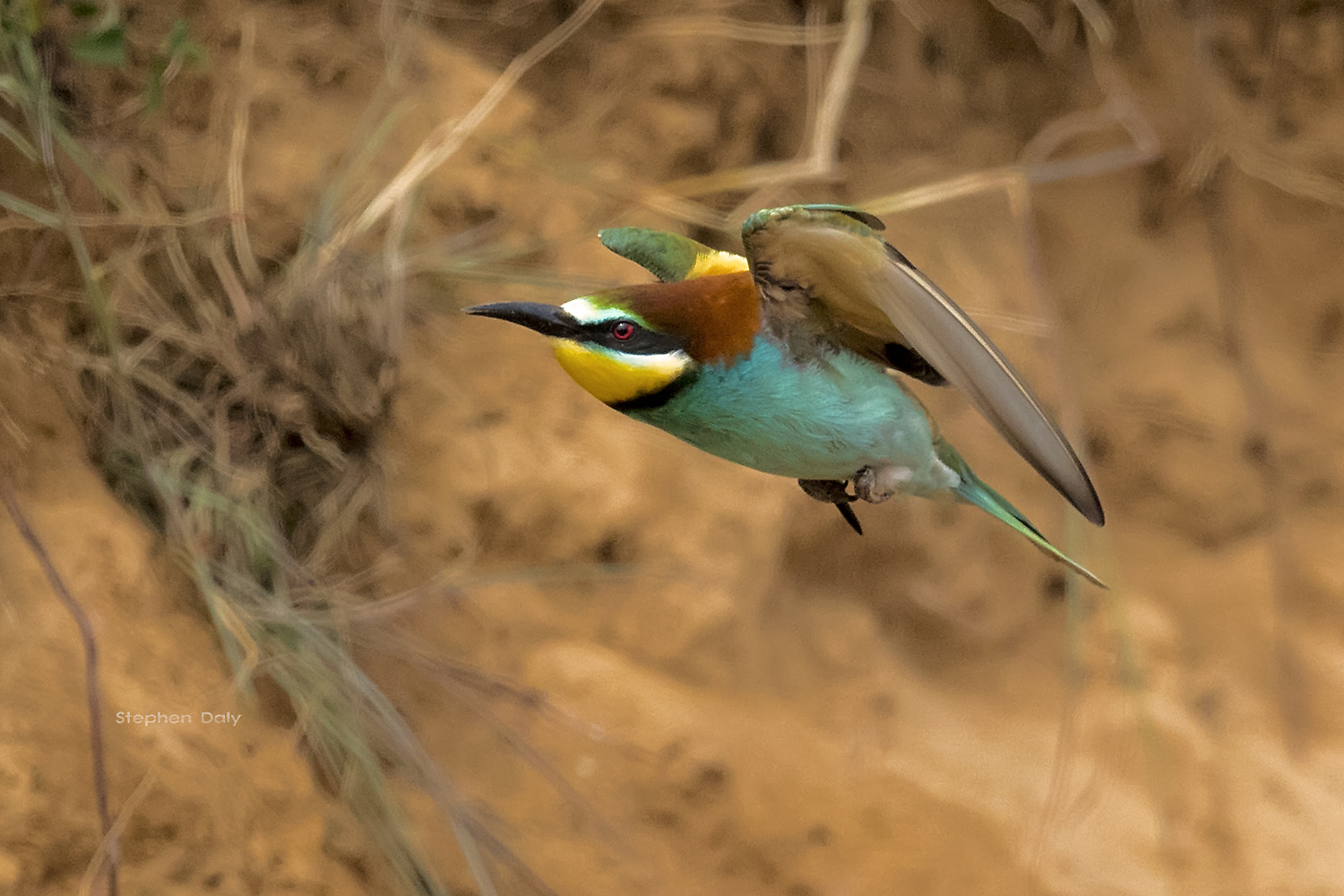 Nice Images Collection: European Bee-eater Desktop Wallpapers