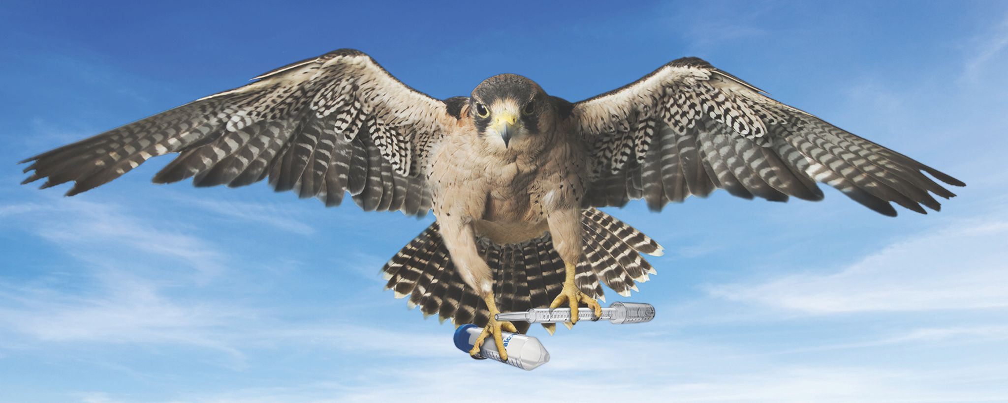 Falcon Pics, Animal Collection