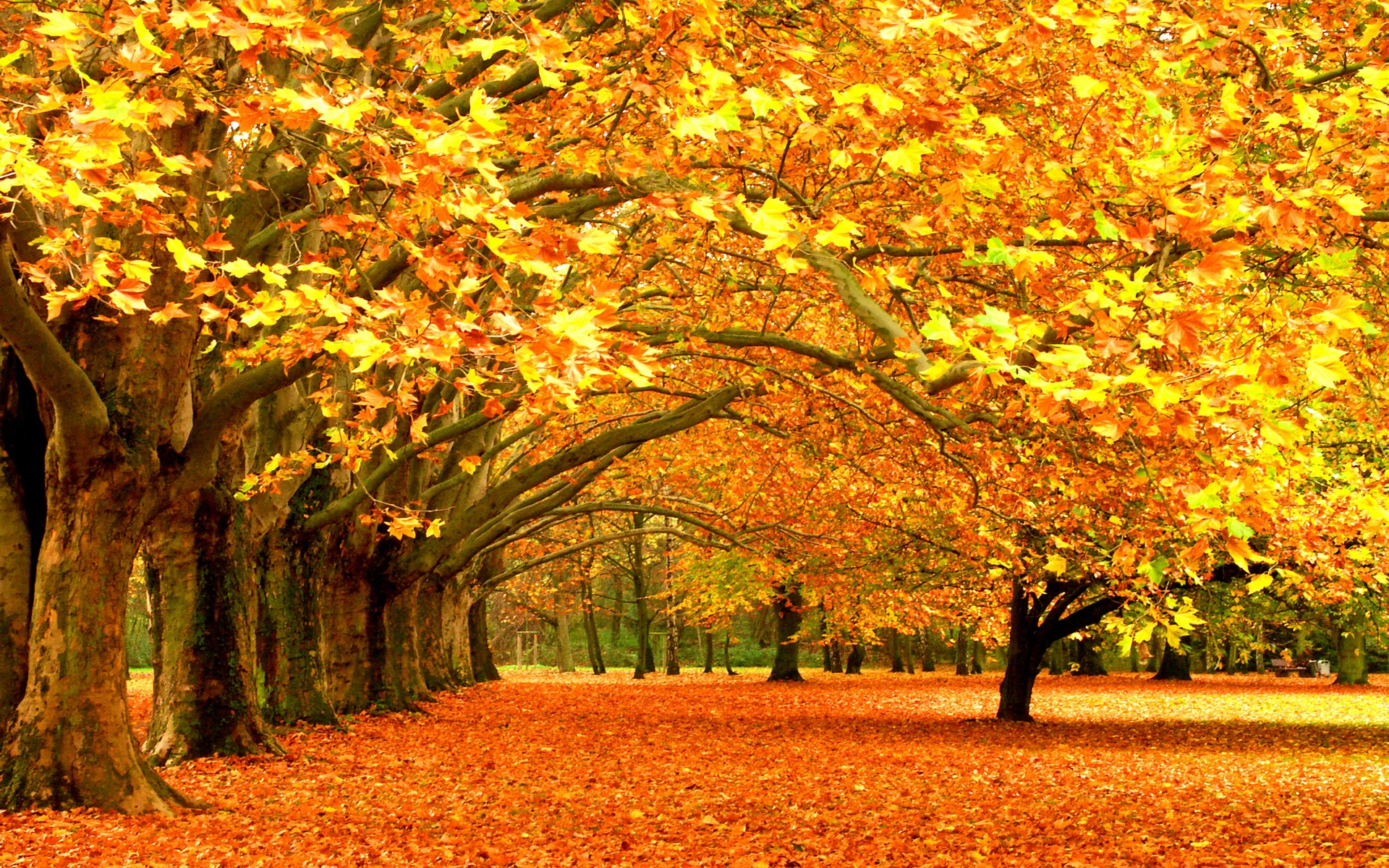 Nice wallpapers Fall 1920x1200px