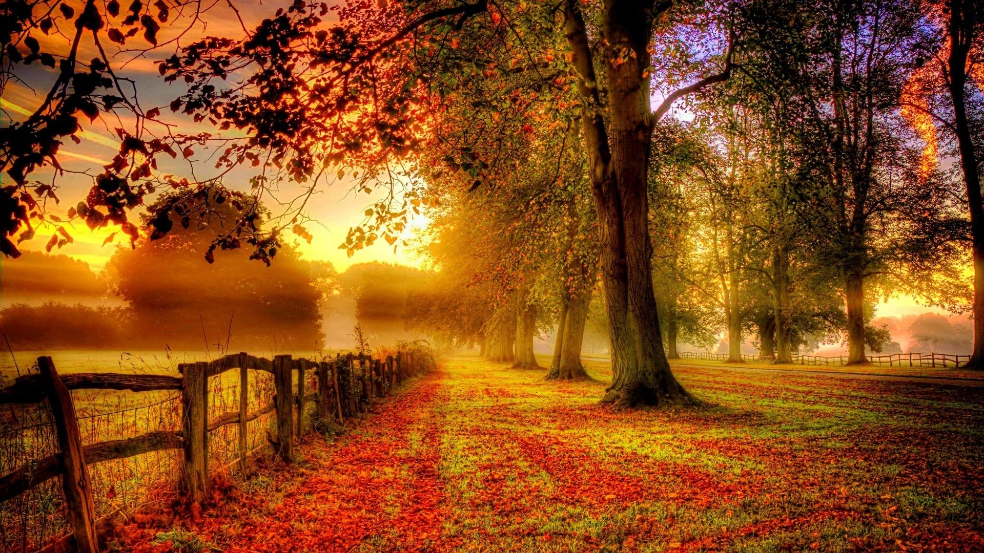 Fall Backgrounds, Compatible - PC, Mobile, Gadgets| 1920x1080 px