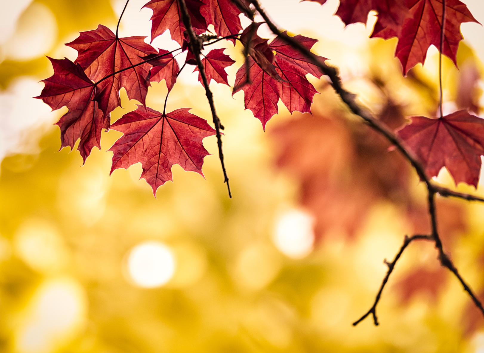 Fall Backgrounds on Wallpapers Vista
