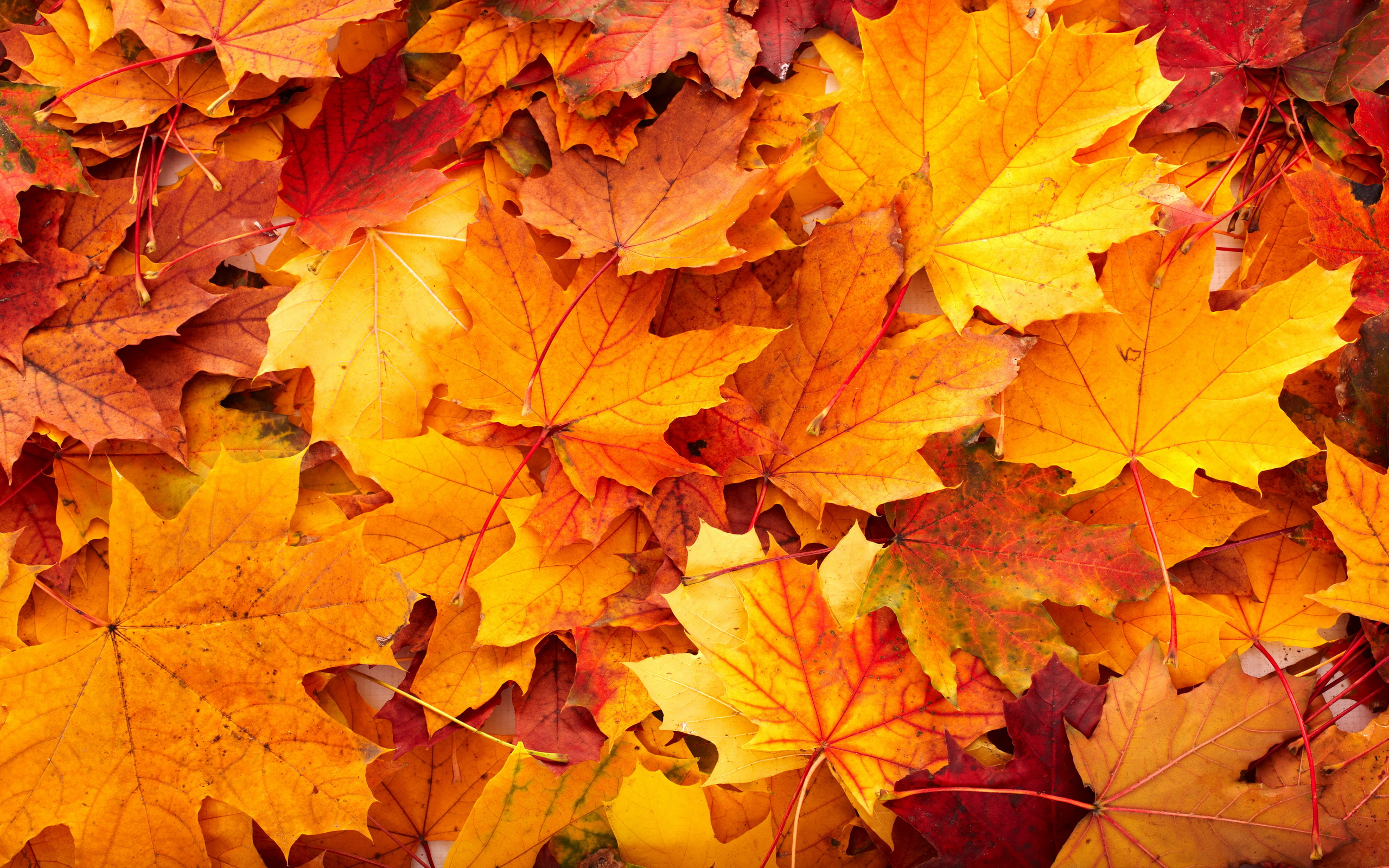HD Quality Wallpaper | Collection: Photography, 2560x1600 Fall