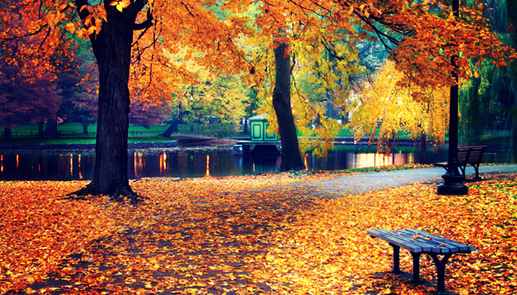 HD Quality Wallpaper | Collection: Photography, 731x418 Fall