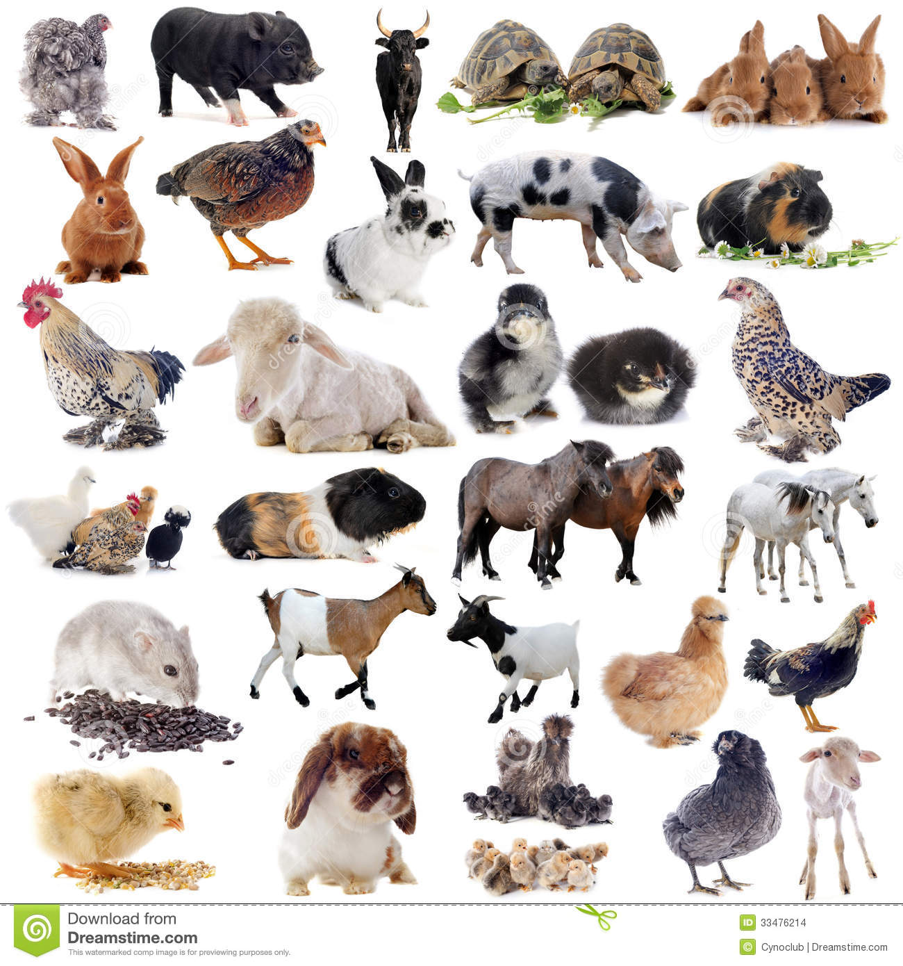 Nice Images Collection: Farm Animals Desktop Wallpapers