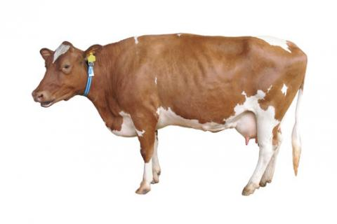 Images of Farm Animals | 480x320