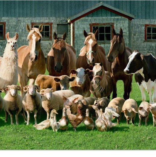 Amazing Farm Animals Pictures & Backgrounds