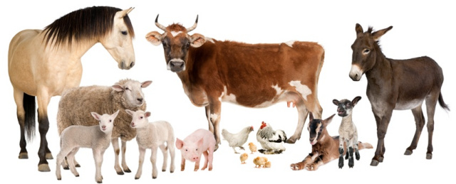 640x259 > Farm Animals Wallpapers