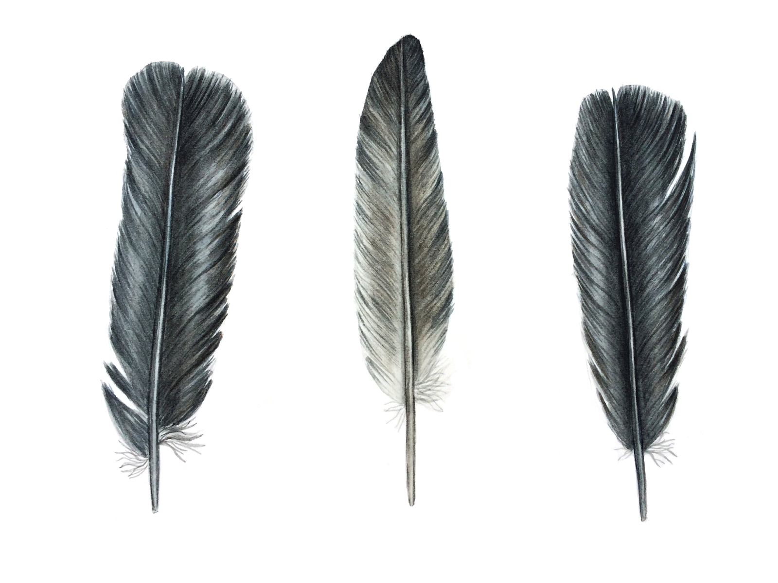 Feather Backgrounds, Compatible - PC, Mobile, Gadgets| 1600x1200 px