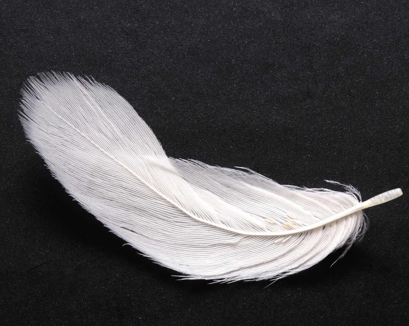 Feather Pics, Photography Collection