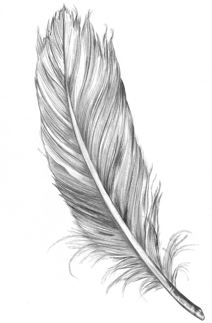 Feather High Quality Background on Wallpapers Vista