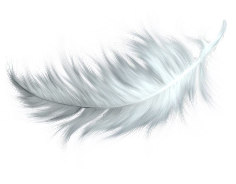 HQ Feather Wallpapers | File 784.51Kb