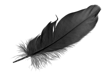 Feather Backgrounds, Compatible - PC, Mobile, Gadgets| 366x245 px