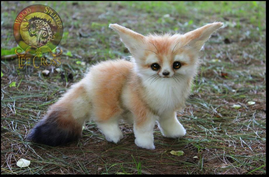 Fennec Fox Backgrounds on Wallpapers Vista