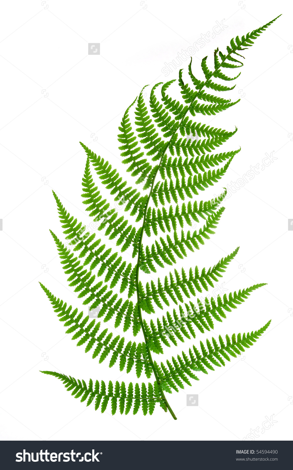Fern HD wallpapers, Desktop wallpaper - most viewed