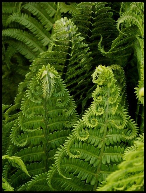 Amazing Fern Pictures & Backgrounds