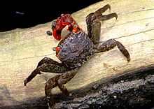 Fiddler Crab Backgrounds, Compatible - PC, Mobile, Gadgets| 220x156 px
