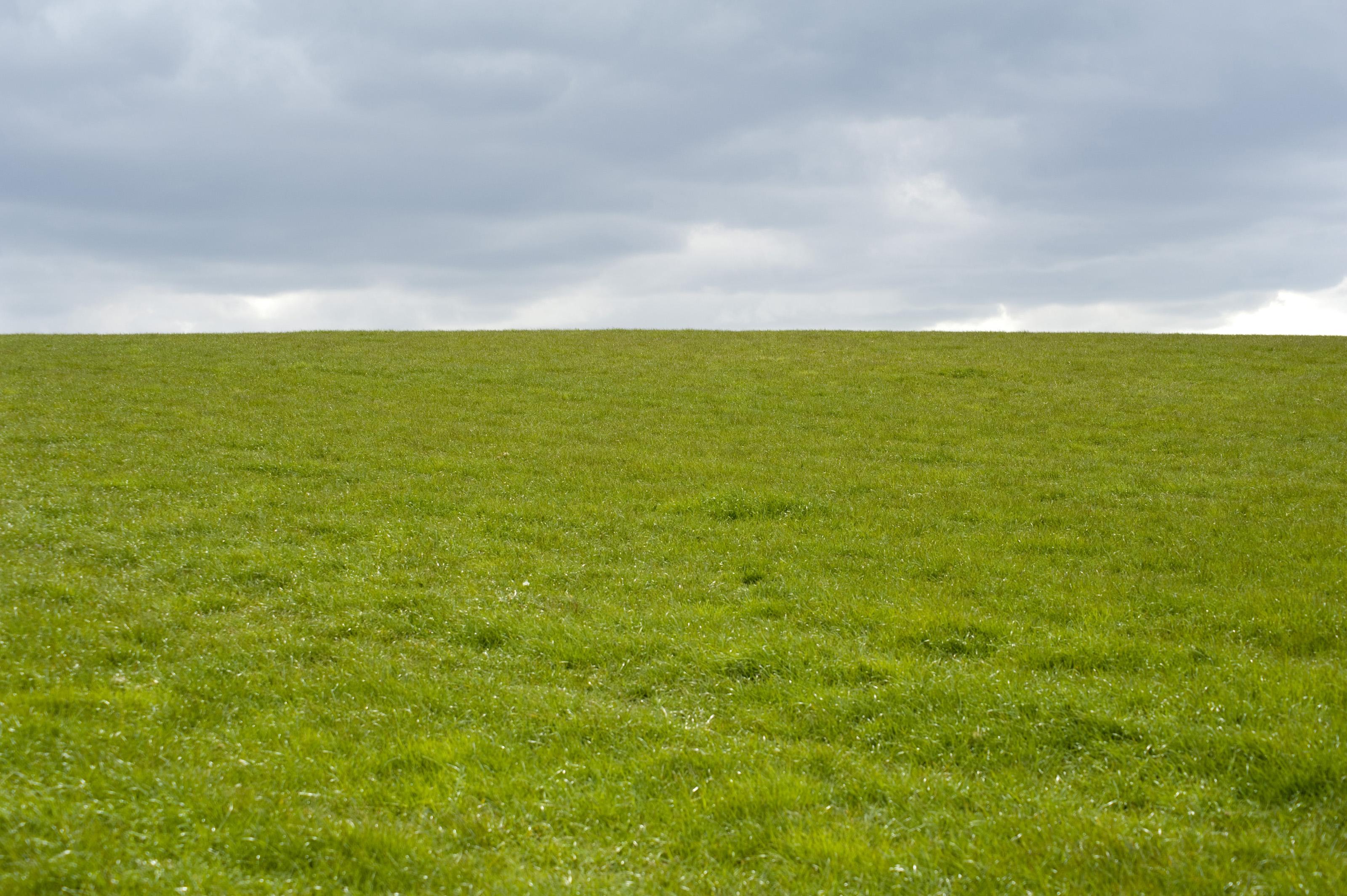 Field #7