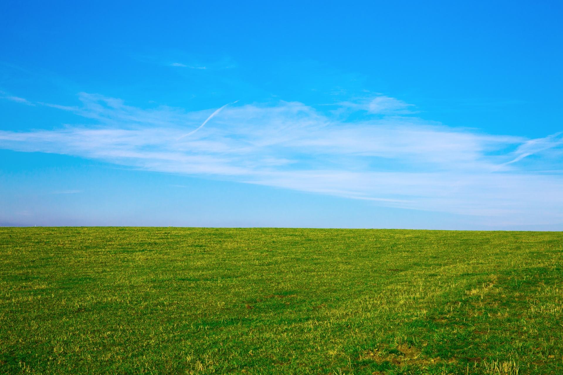 Field #1