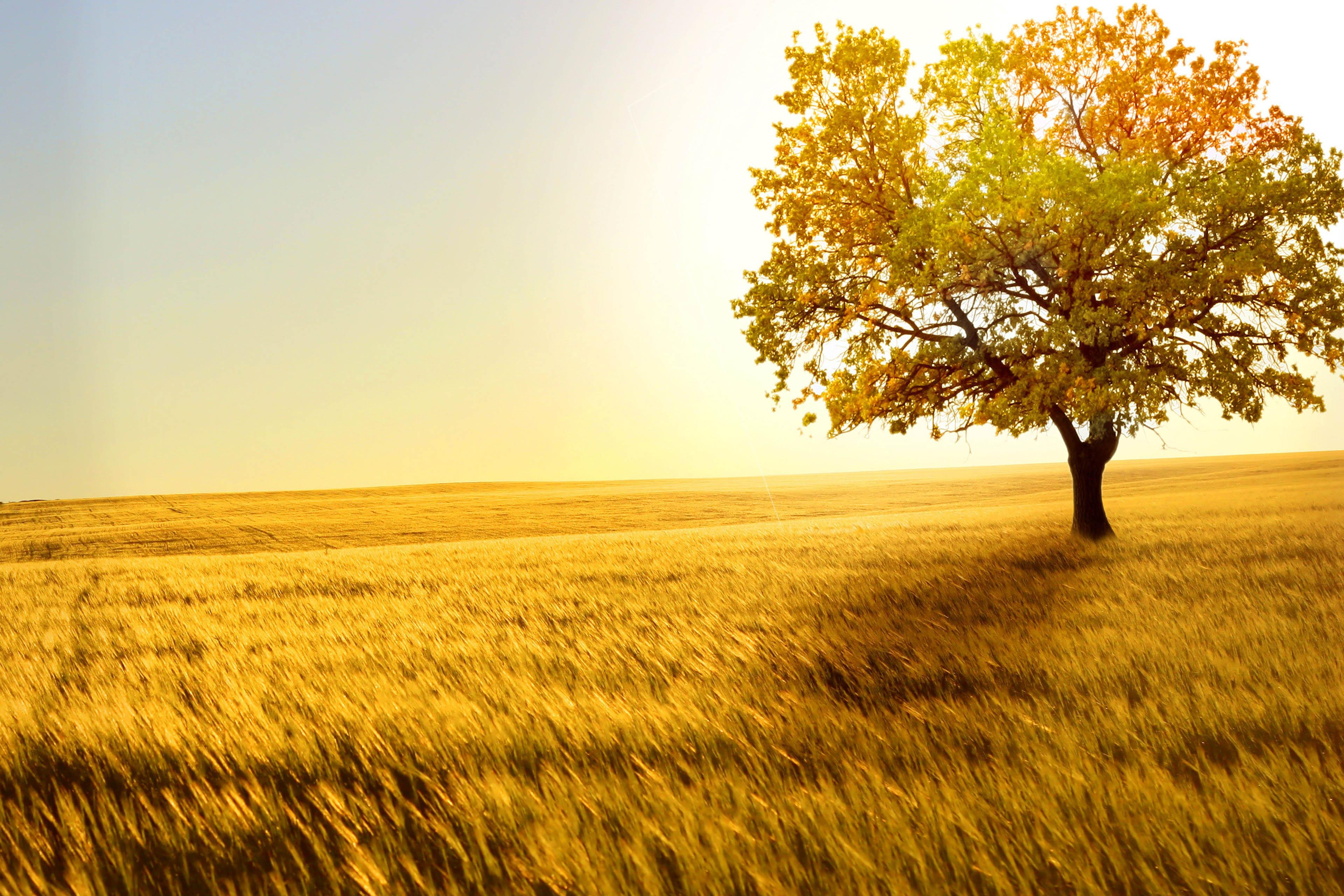Field Backgrounds, Compatible - PC, Mobile, Gadgets| 3840x2560 px