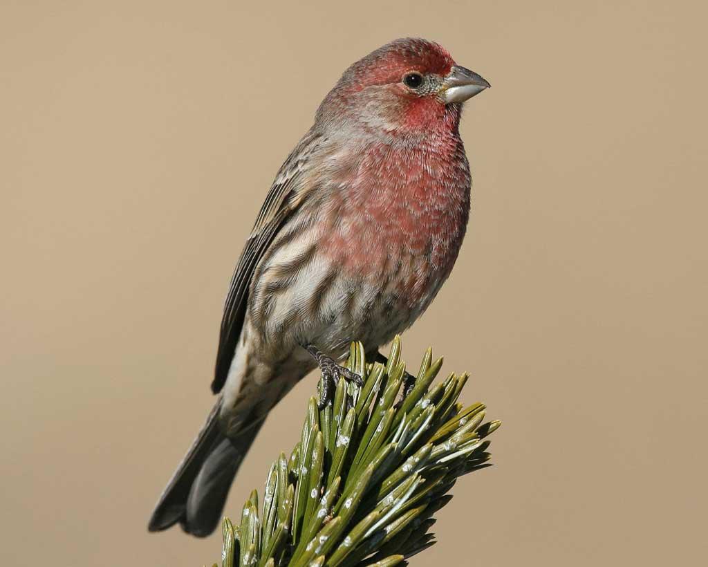 Finch #5
