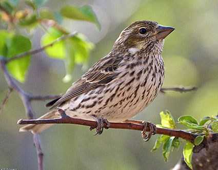Images of Finch | 425x331