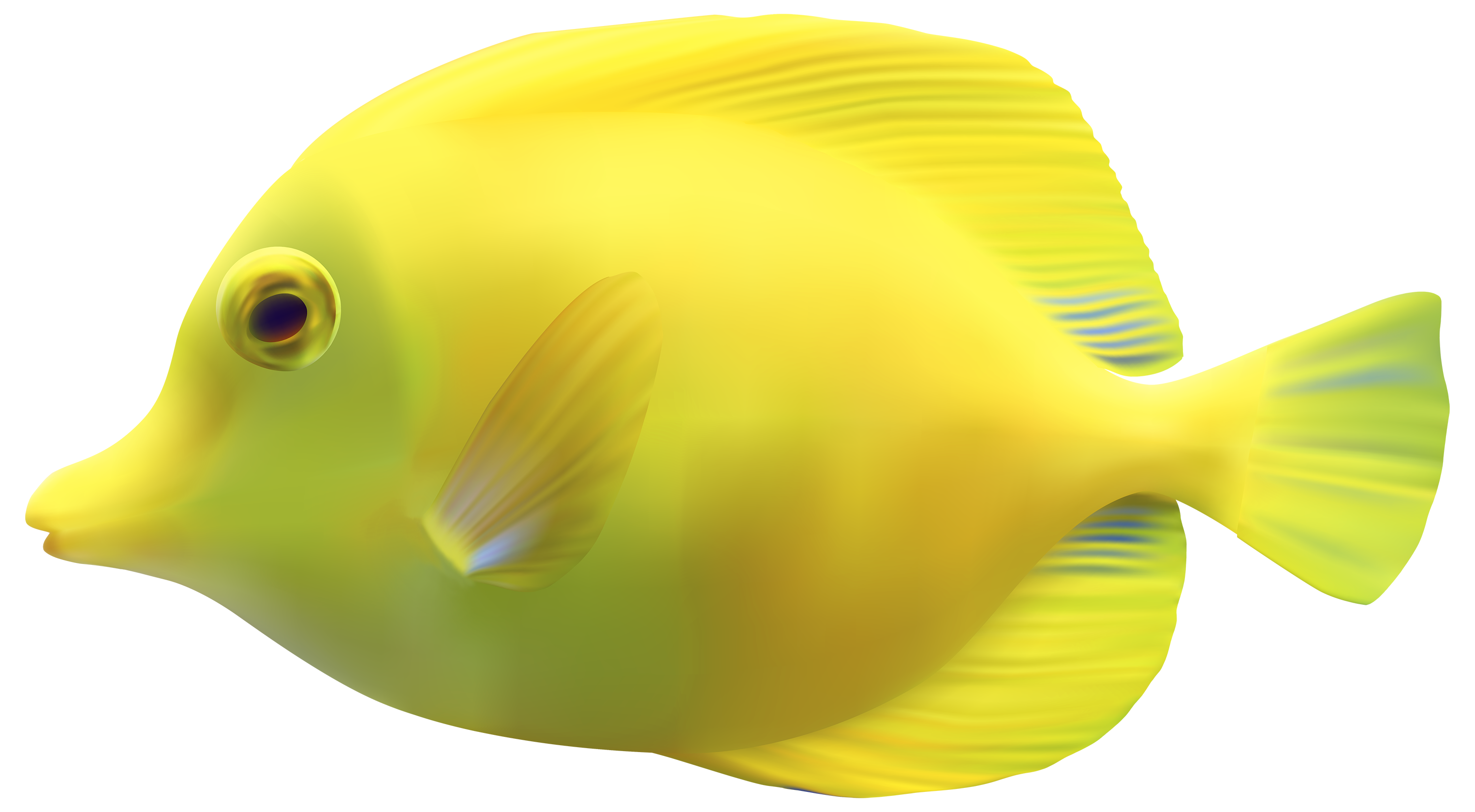Fish High Quality Background on Wallpapers Vista