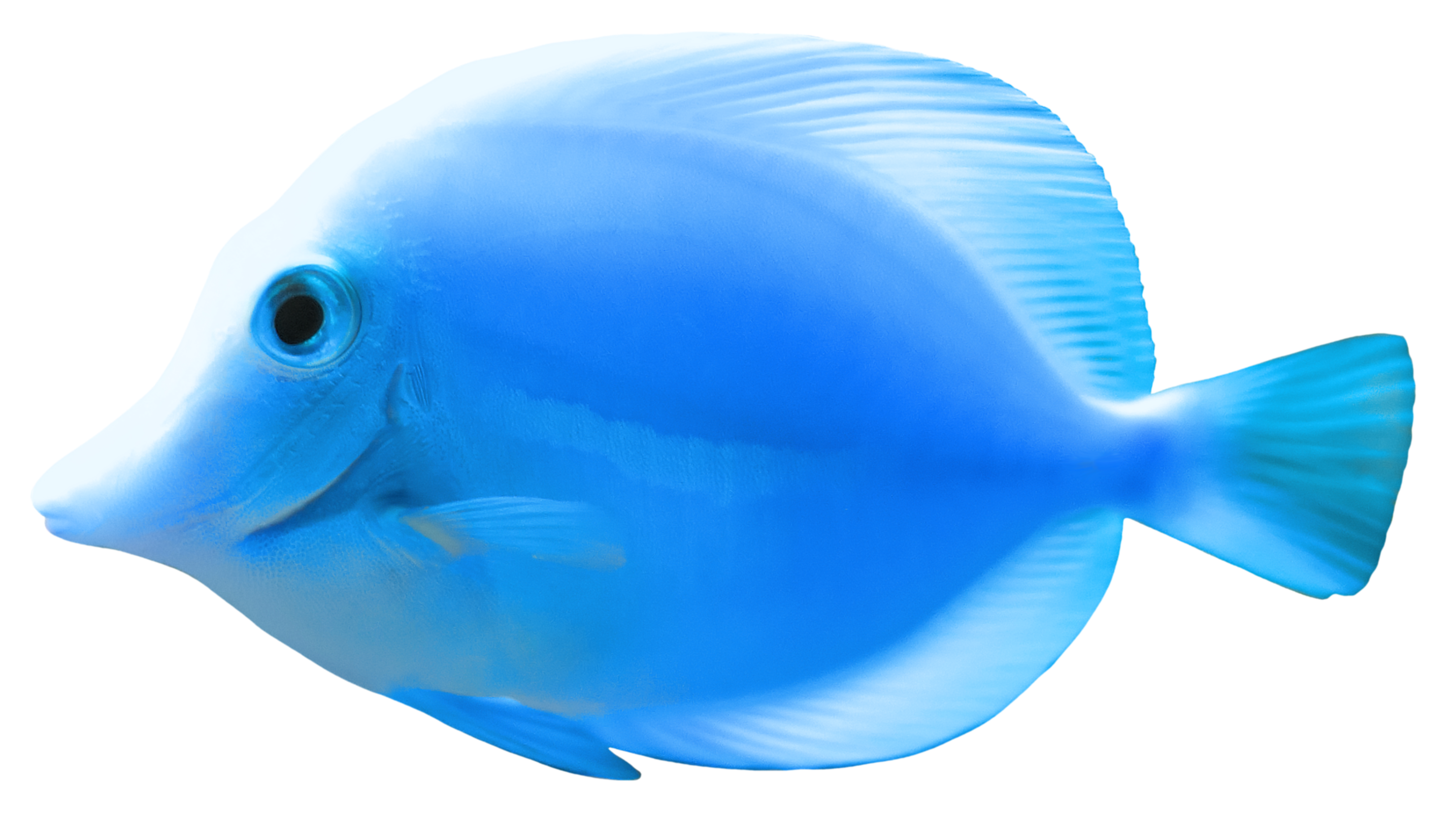 Fish Backgrounds on Wallpapers Vista