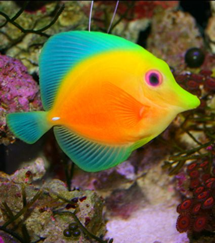 Nice Images Collection: Fish Desktop Wallpapers