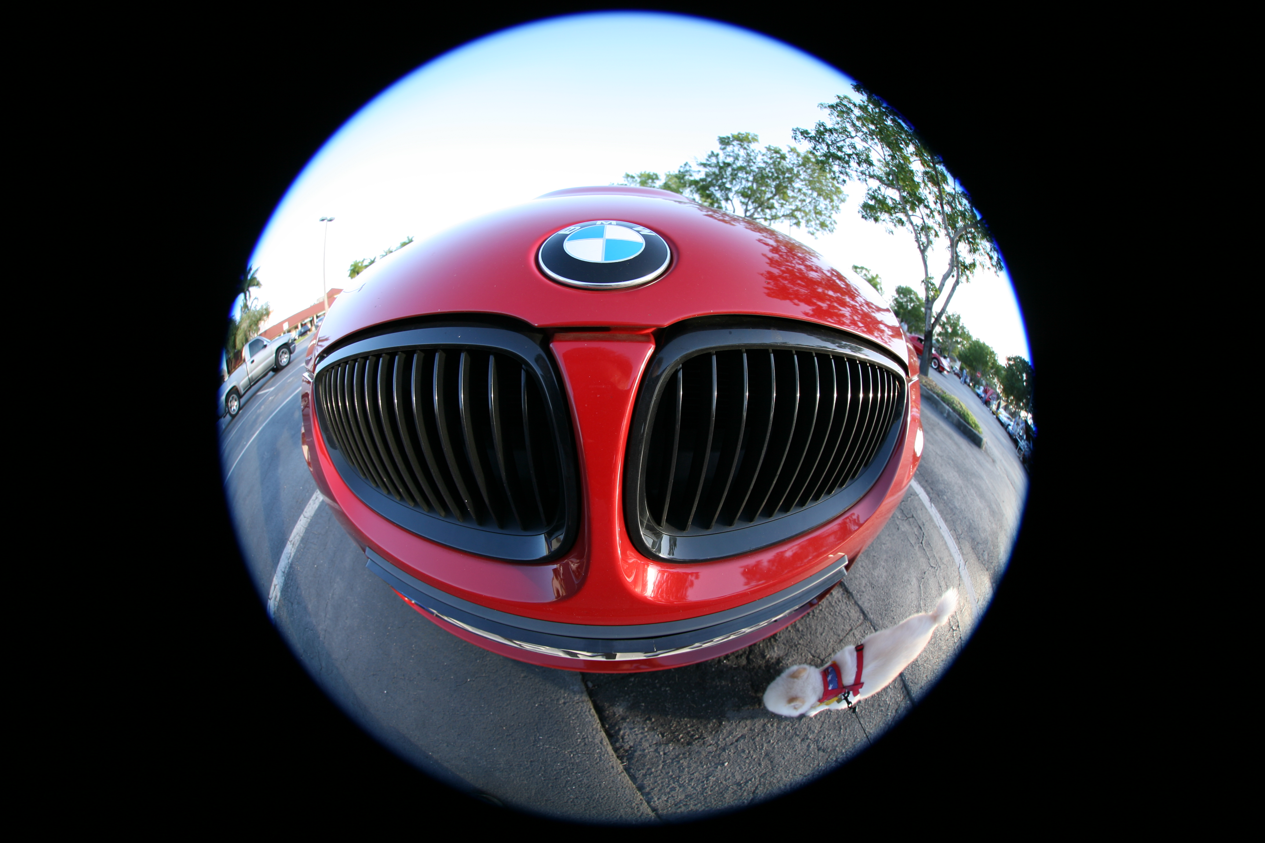 Fisheye Pics, Photography Collection
