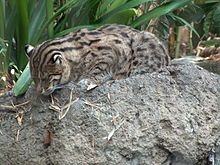 Fishing Cat Backgrounds, Compatible - PC, Mobile, Gadgets| 220x165 px