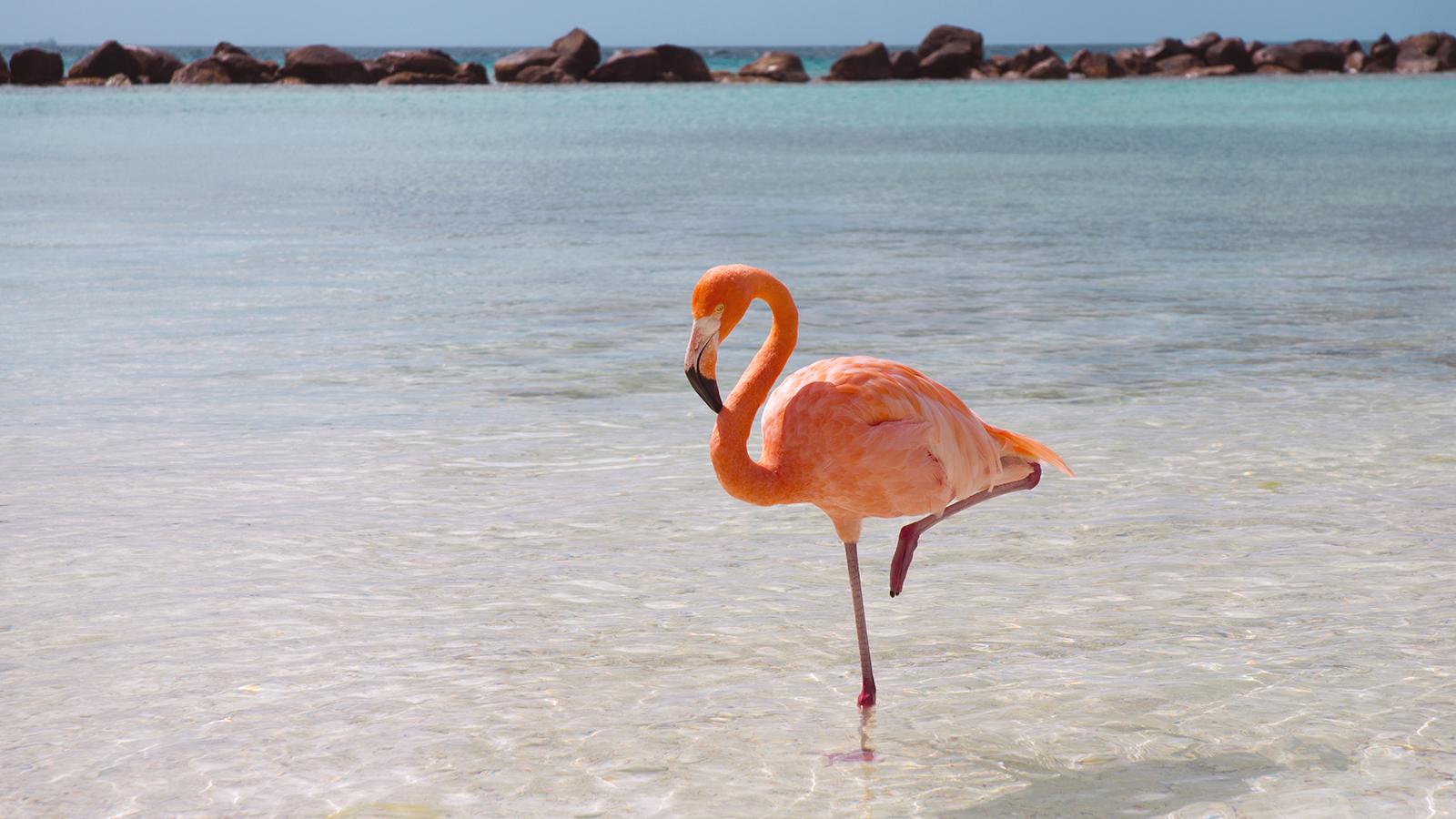 1600x900 > Flamingo Wallpapers