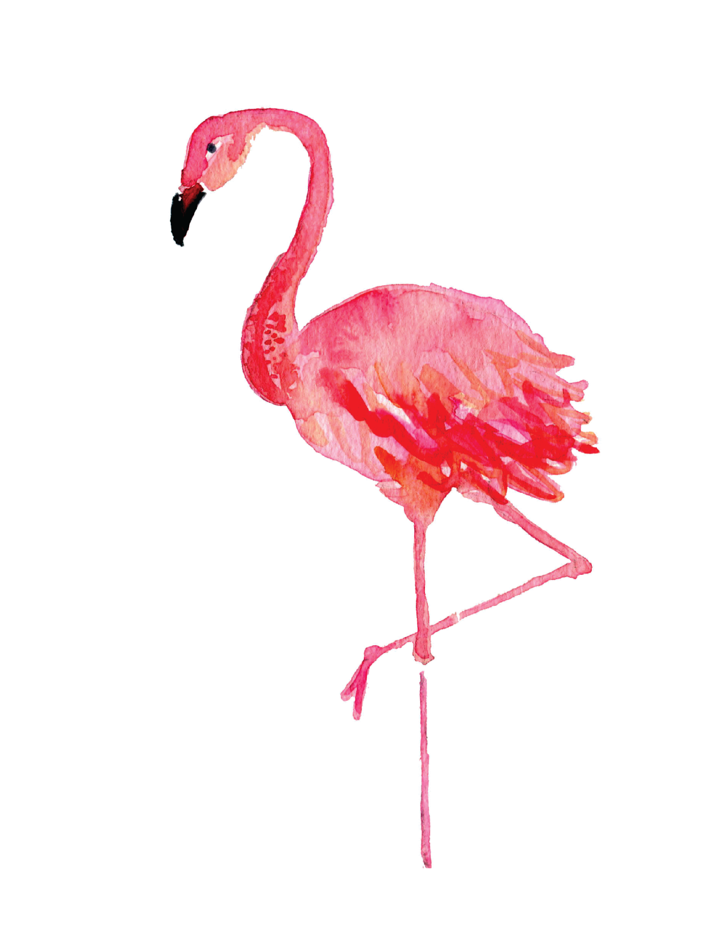 High Resolution Wallpaper | Flamingo 2550x3300 px