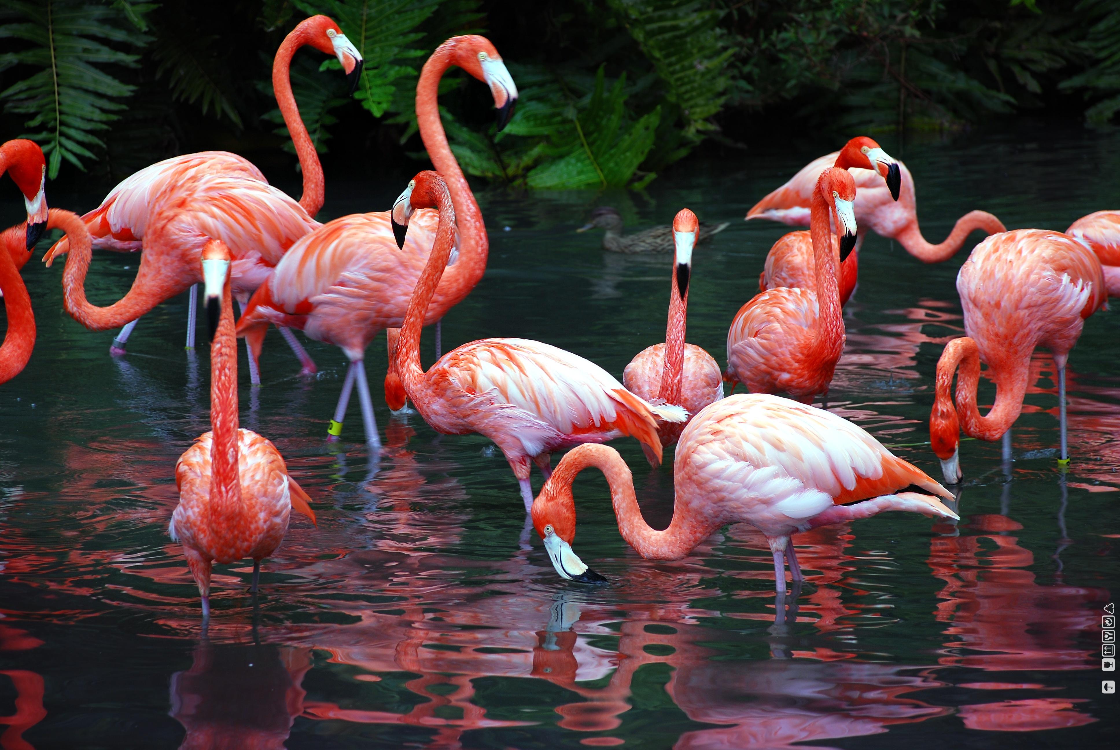 Flamingo Backgrounds, Compatible - PC, Mobile, Gadgets| 3872x2592 px