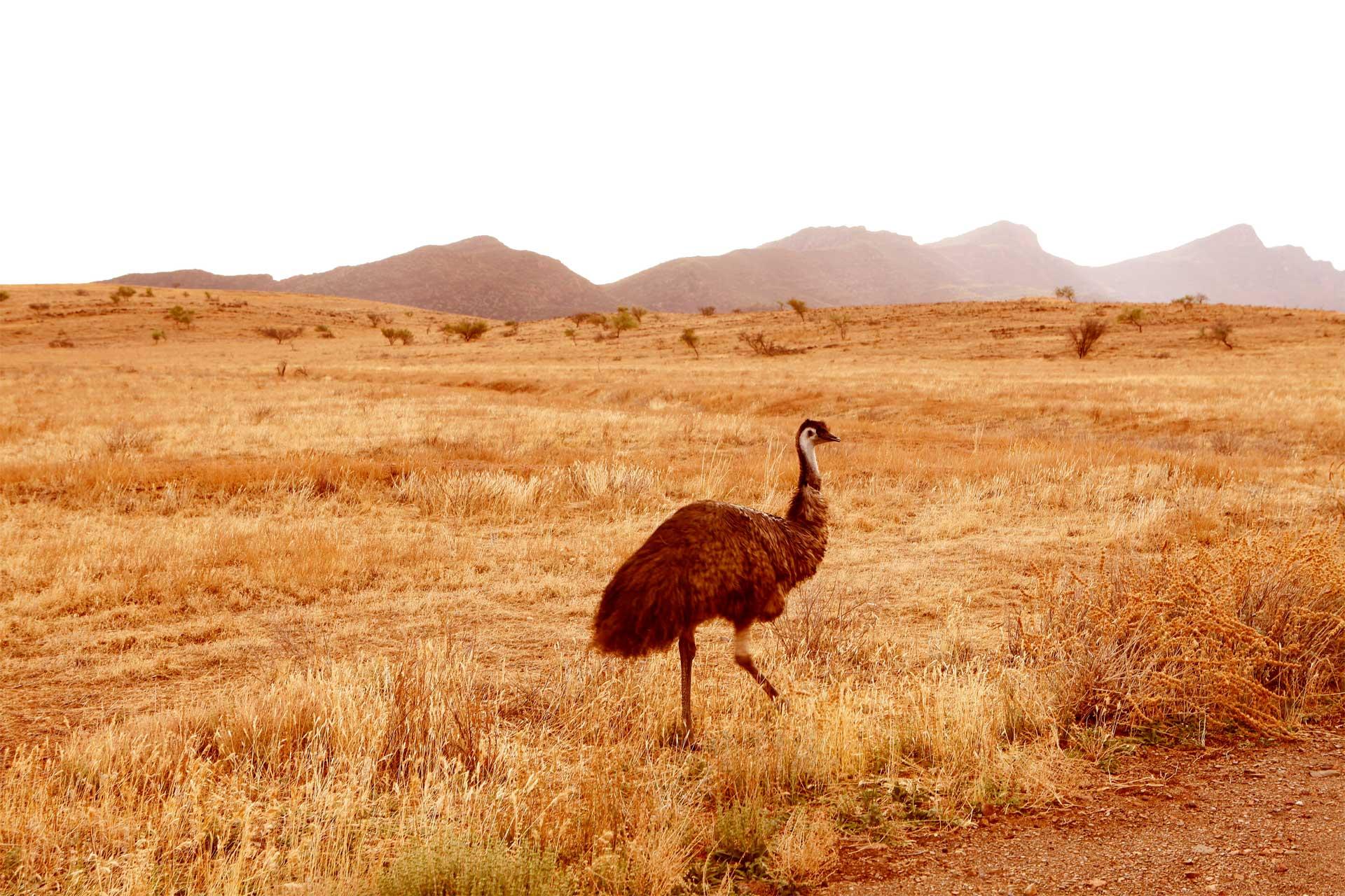 High Resolution Wallpaper | Flinders Ranges 1920x1280 px