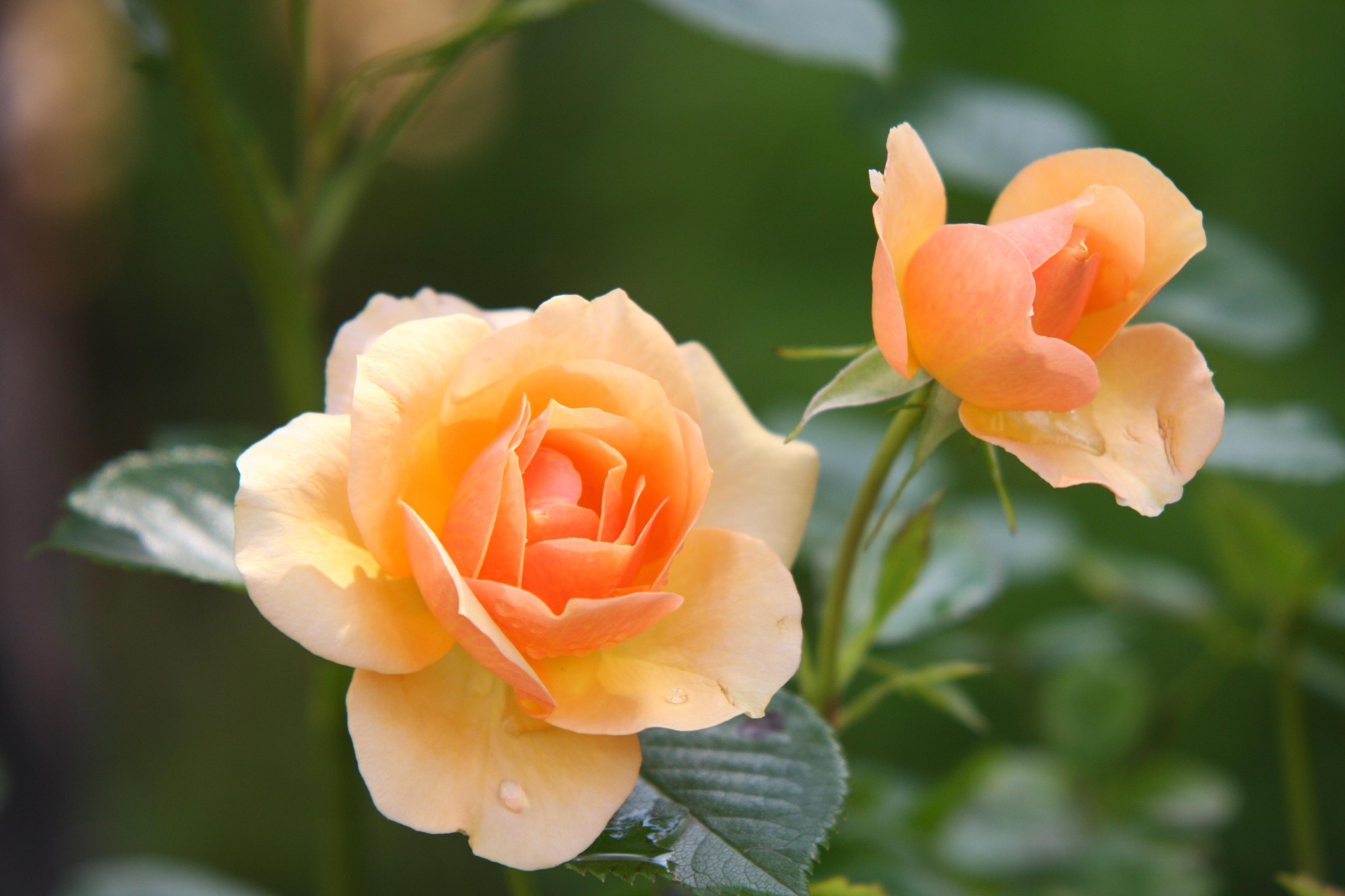HQ Flower Wallpapers | File 1329.37Kb