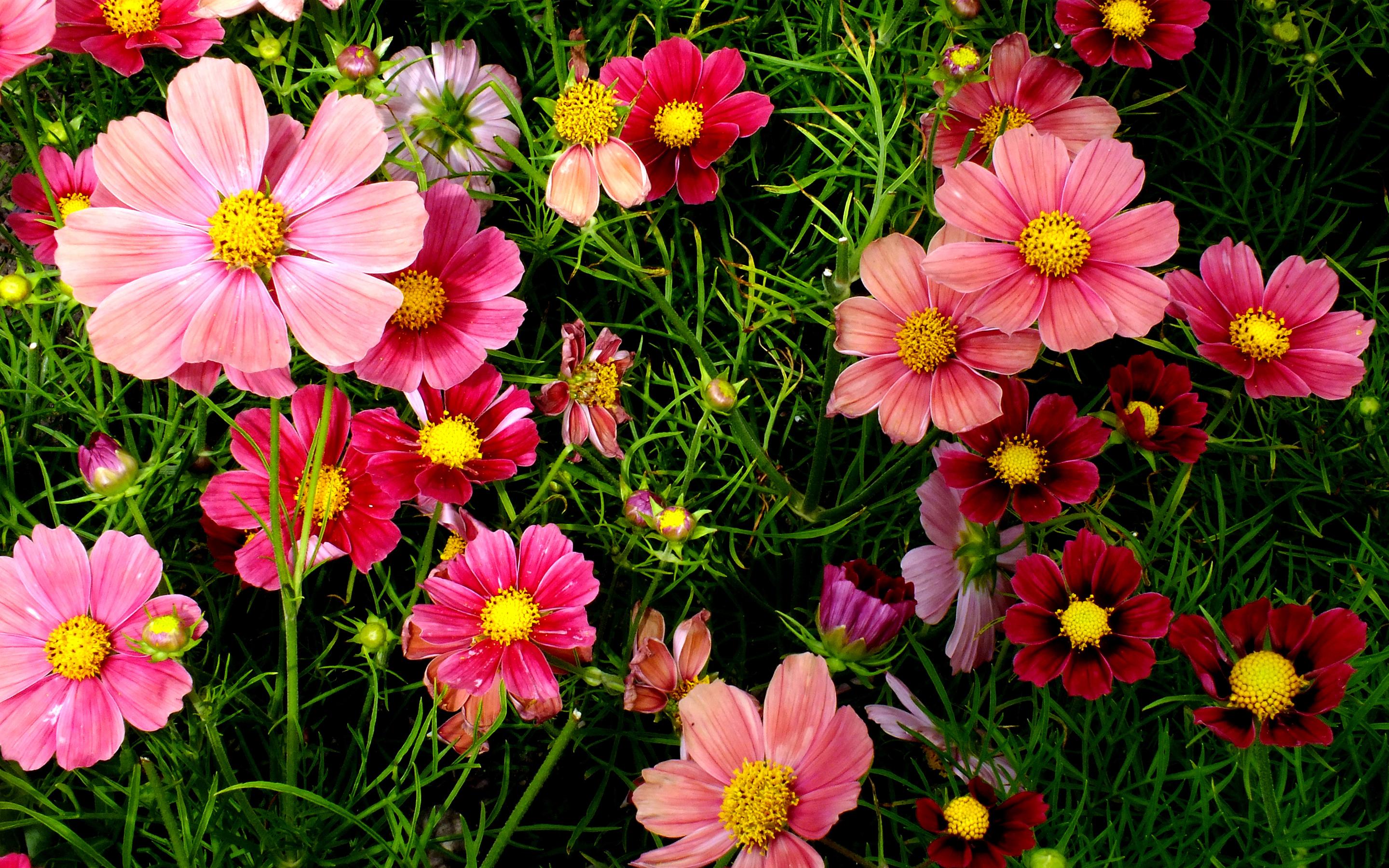 Nice wallpapers Flowers 2880x1800px