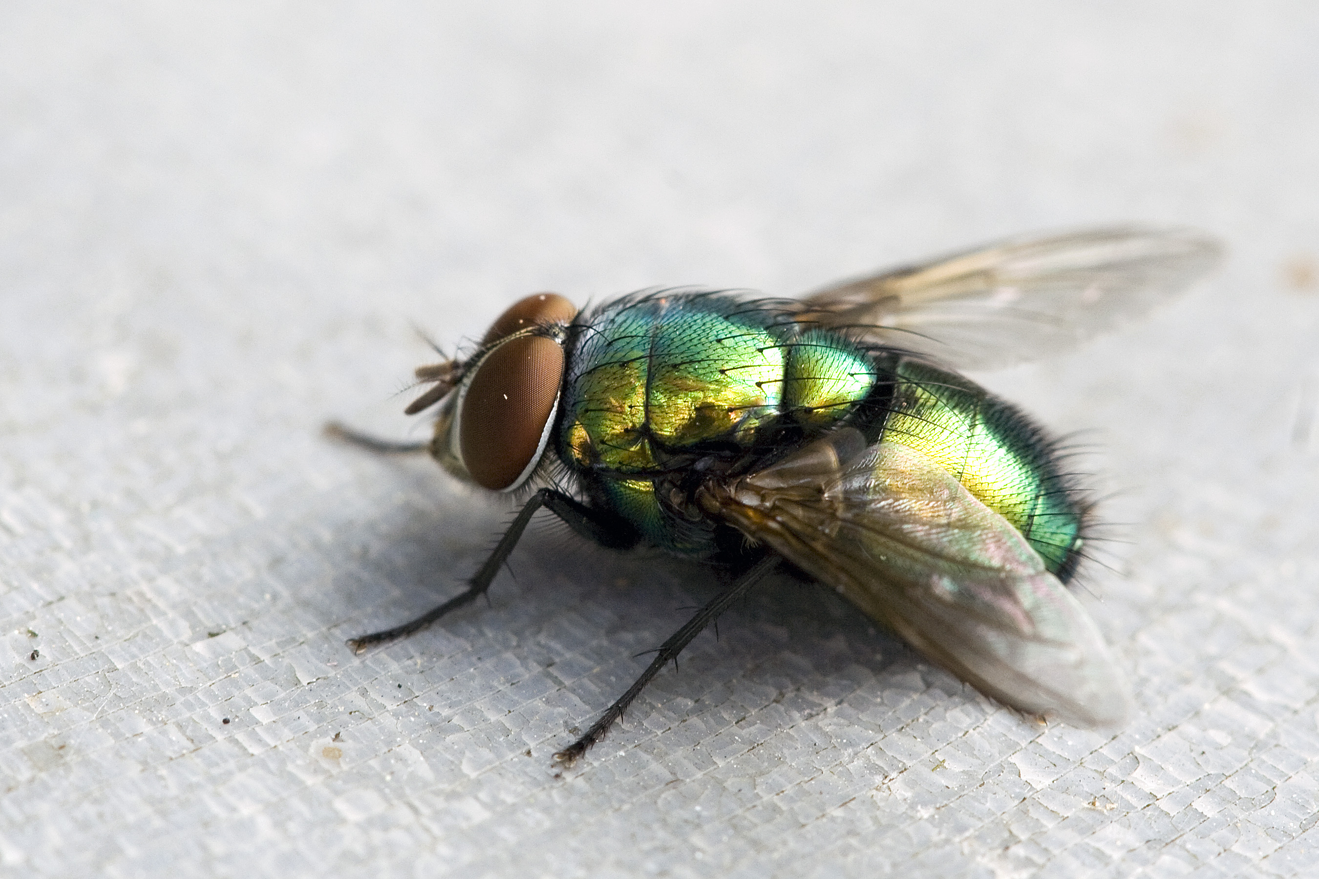 Images of Fly | 2700x1800