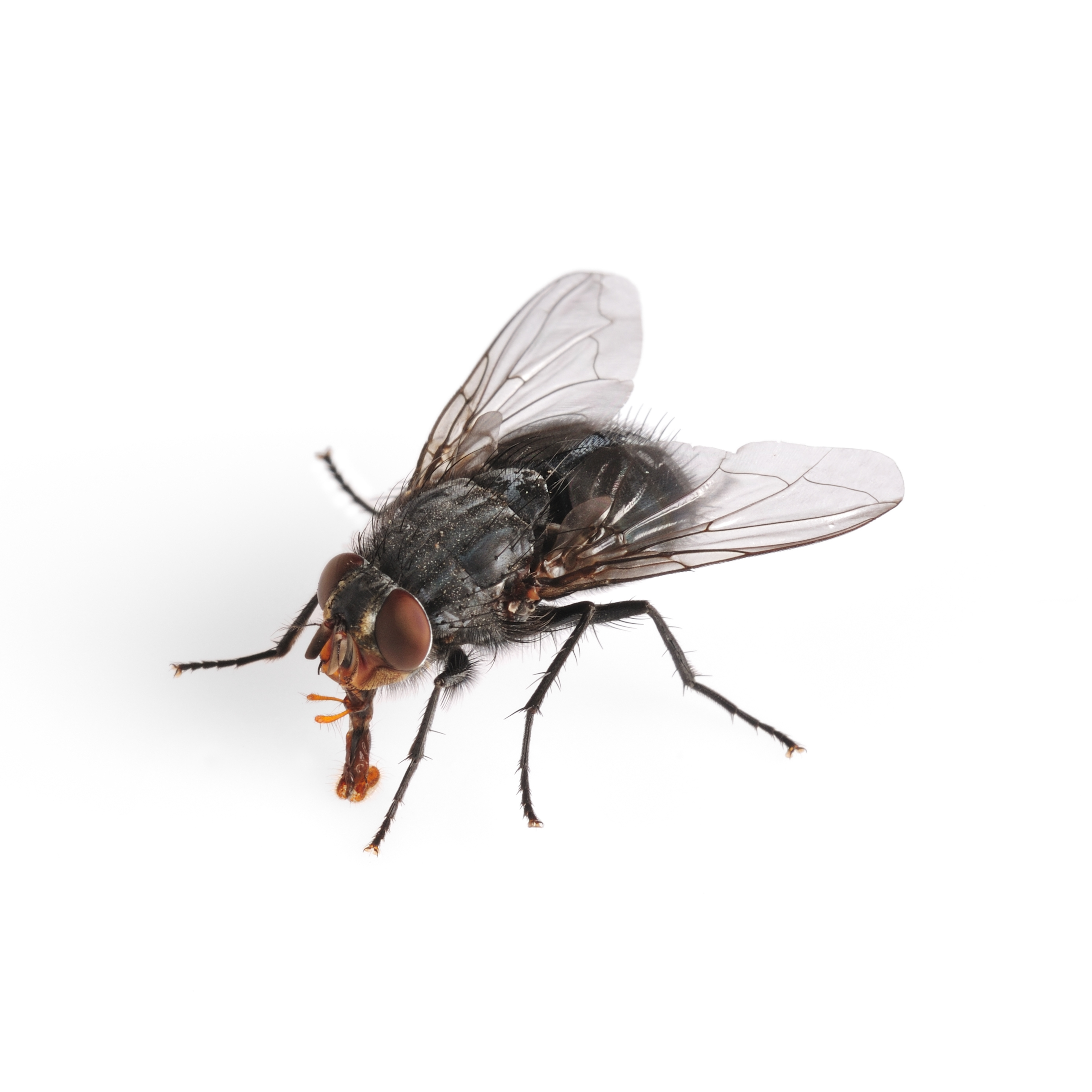 Images of Fly | 2980x2980