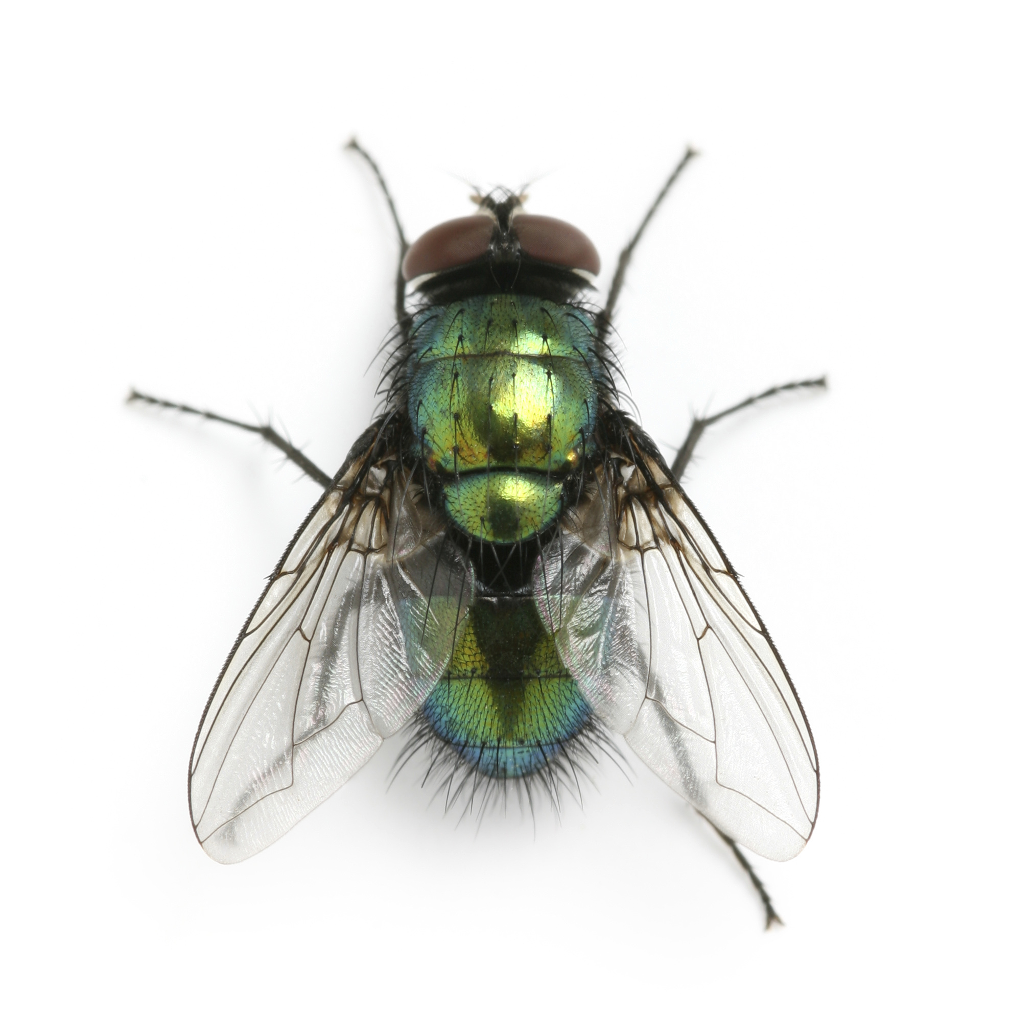 HQ Fly Wallpapers | File 987.45Kb