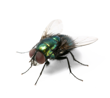 Fly Backgrounds, Compatible - PC, Mobile, Gadgets| 367x327 px