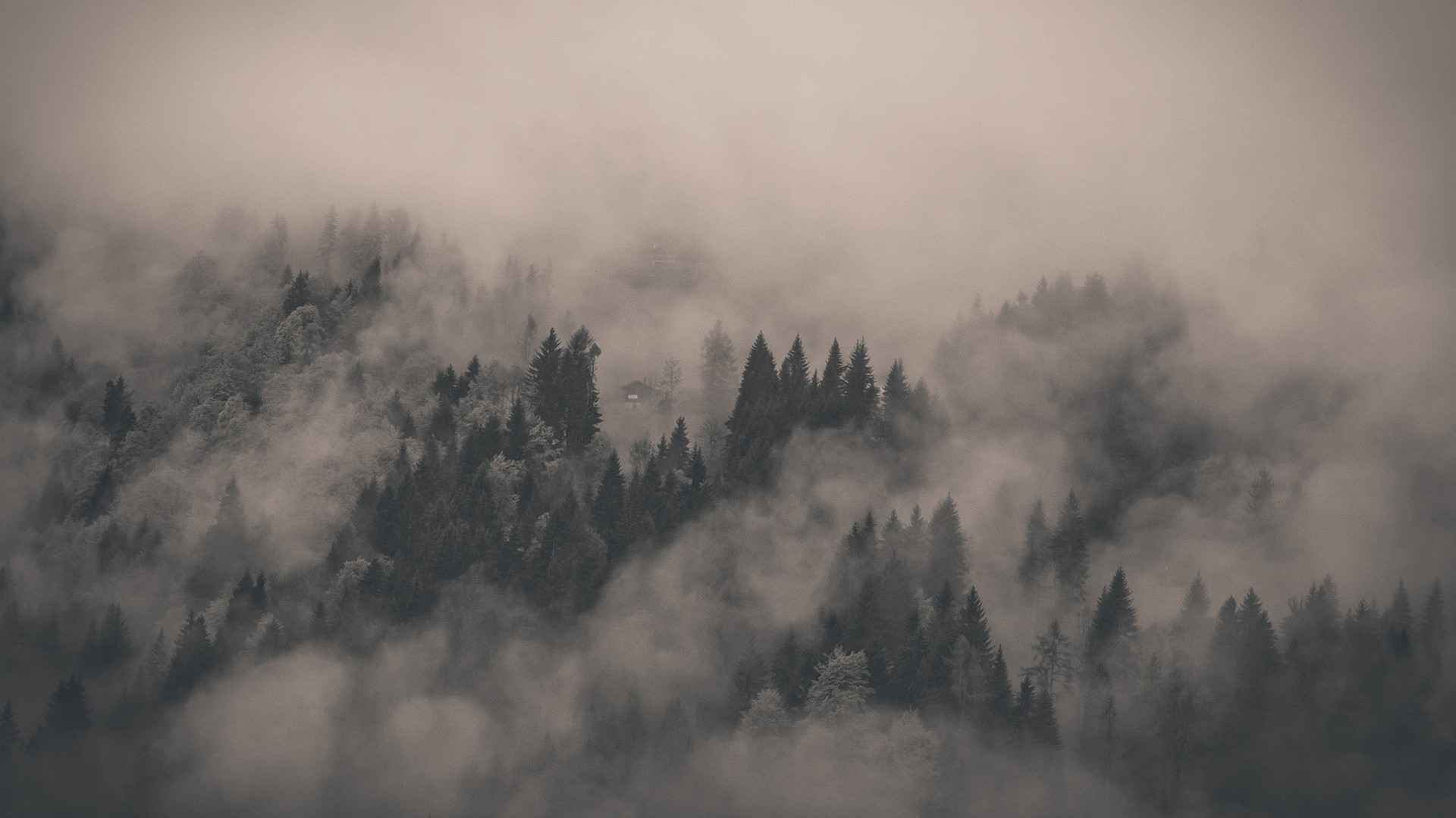 Fog Pics, Earth Collection
