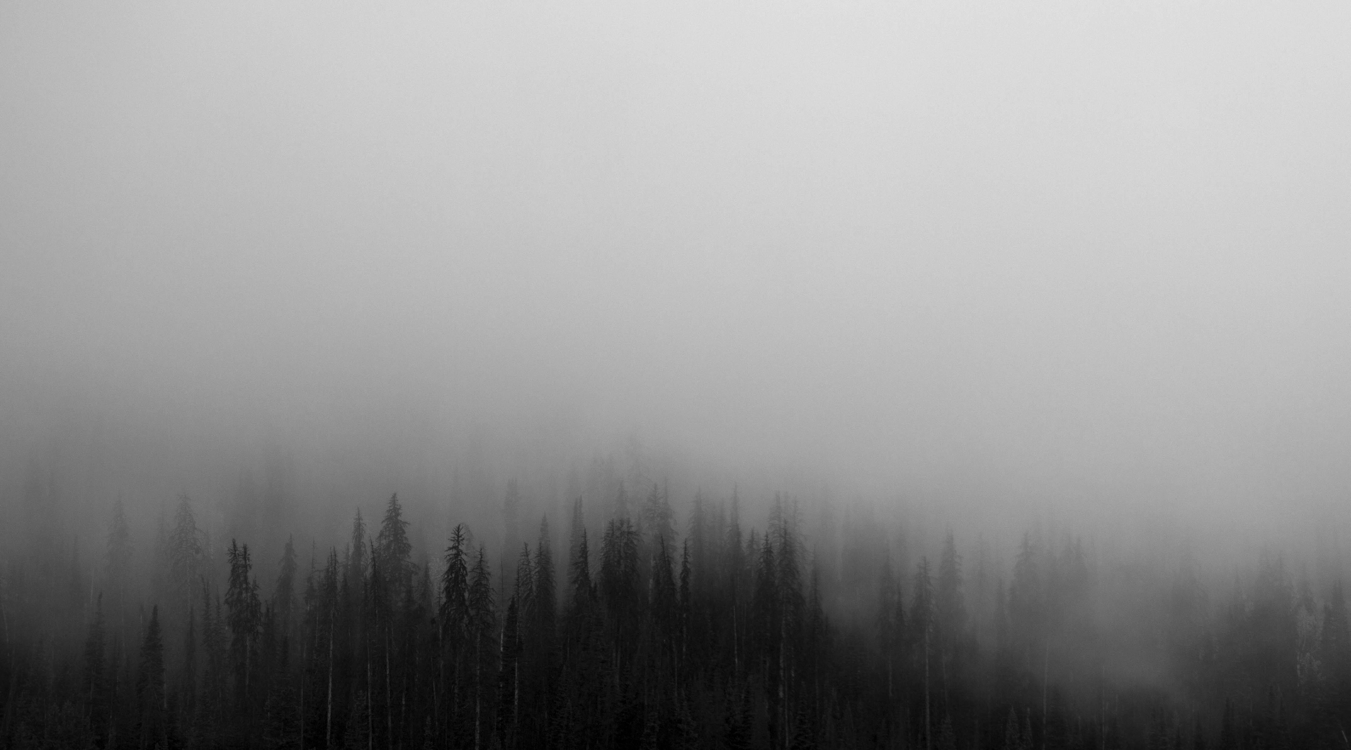 Fog #8
