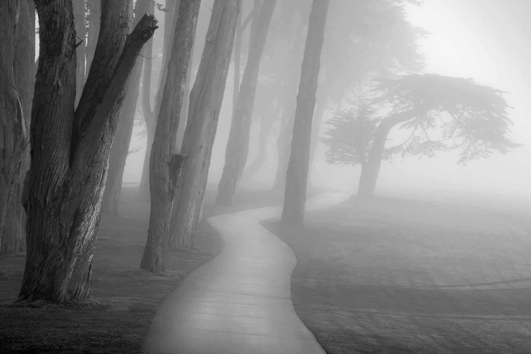 Amazing Fog Pictures & Backgrounds