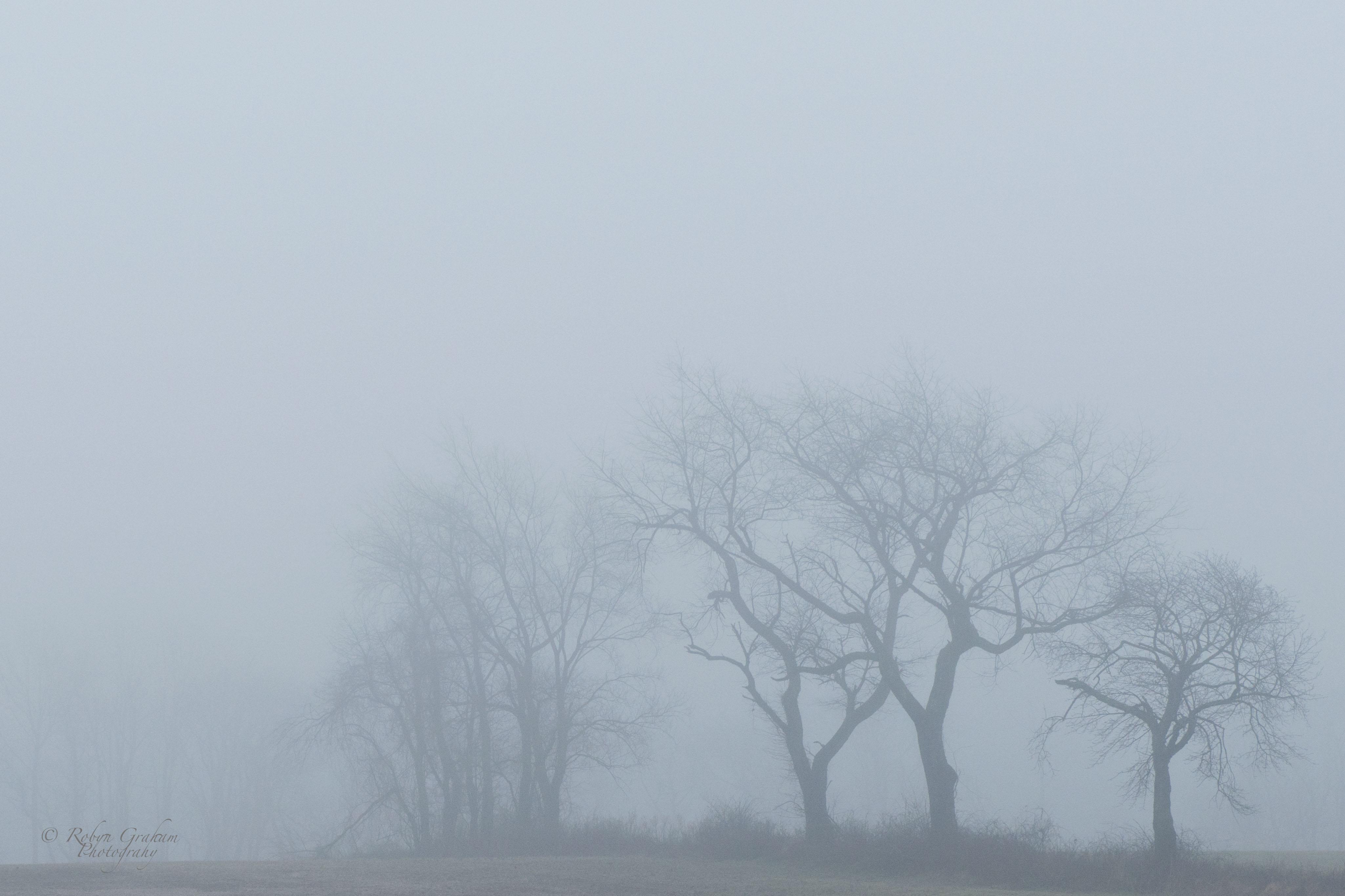 Fog #17