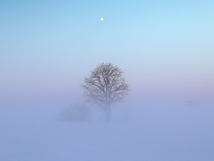 HQ Fog Wallpapers | File 57.69Kb