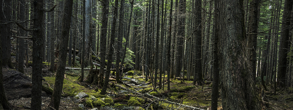 Images of Forest | 1000x375