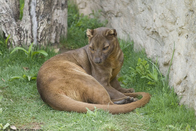 Images of Fossa | 752x502