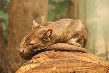 Images of Fossa | 220x147