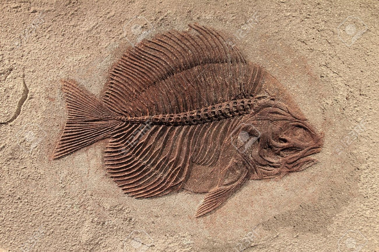 Fossil #5