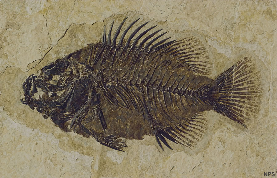 Images of Fossil | 900x580